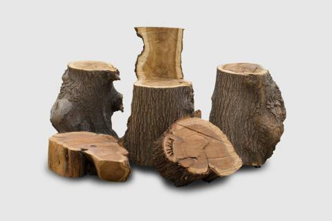 Powhatan Stumps featured image