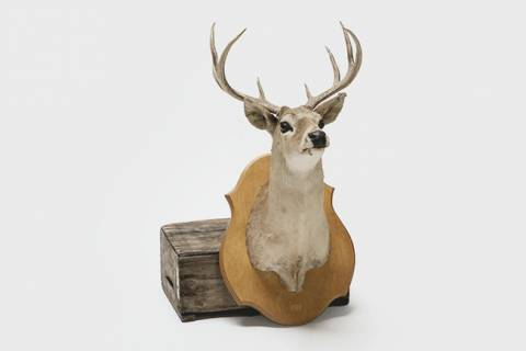 Woodland Stag's Head featured image